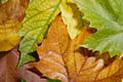 Podzimní snůška inovací a změn